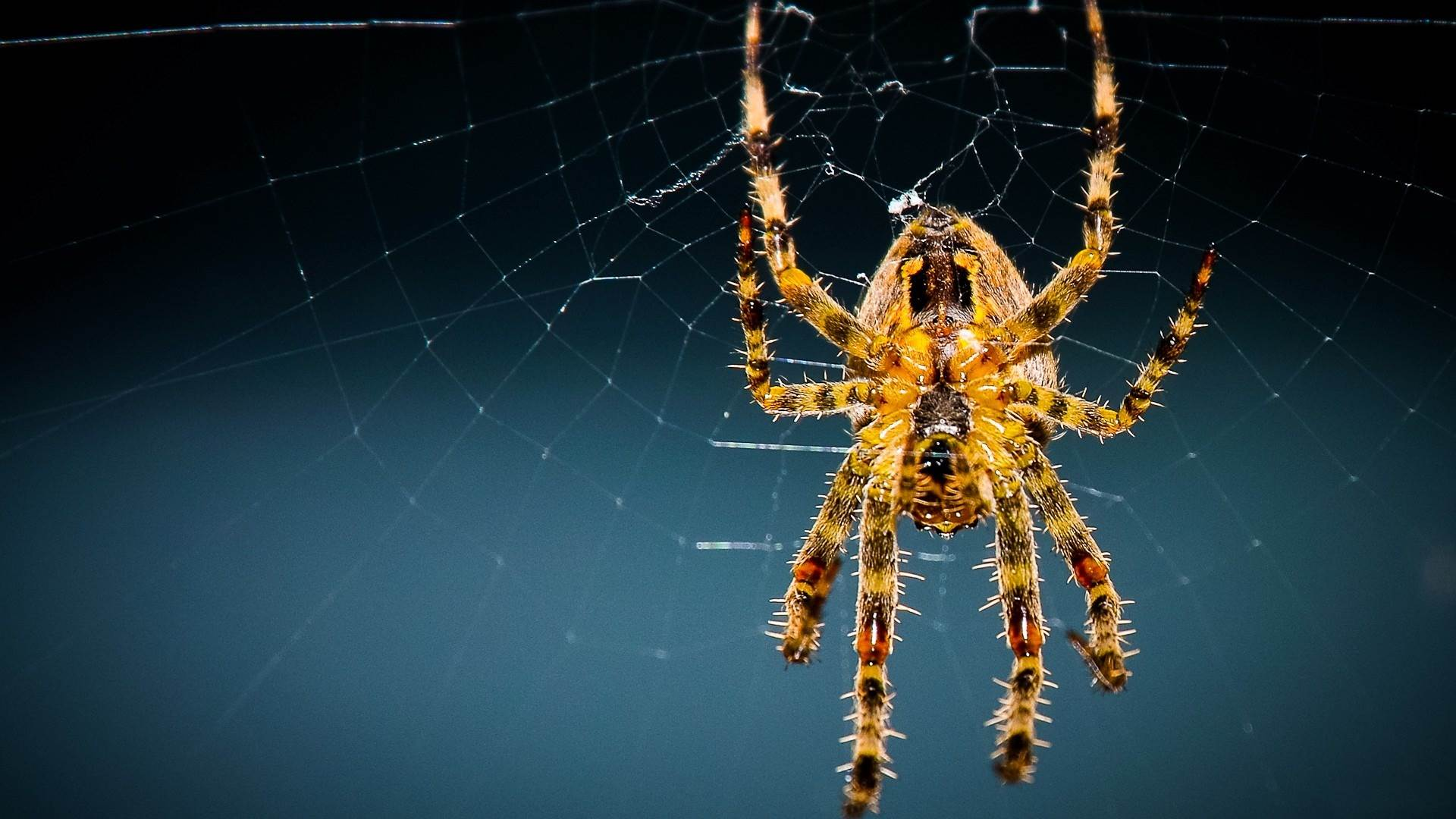 Beautiful spider web images