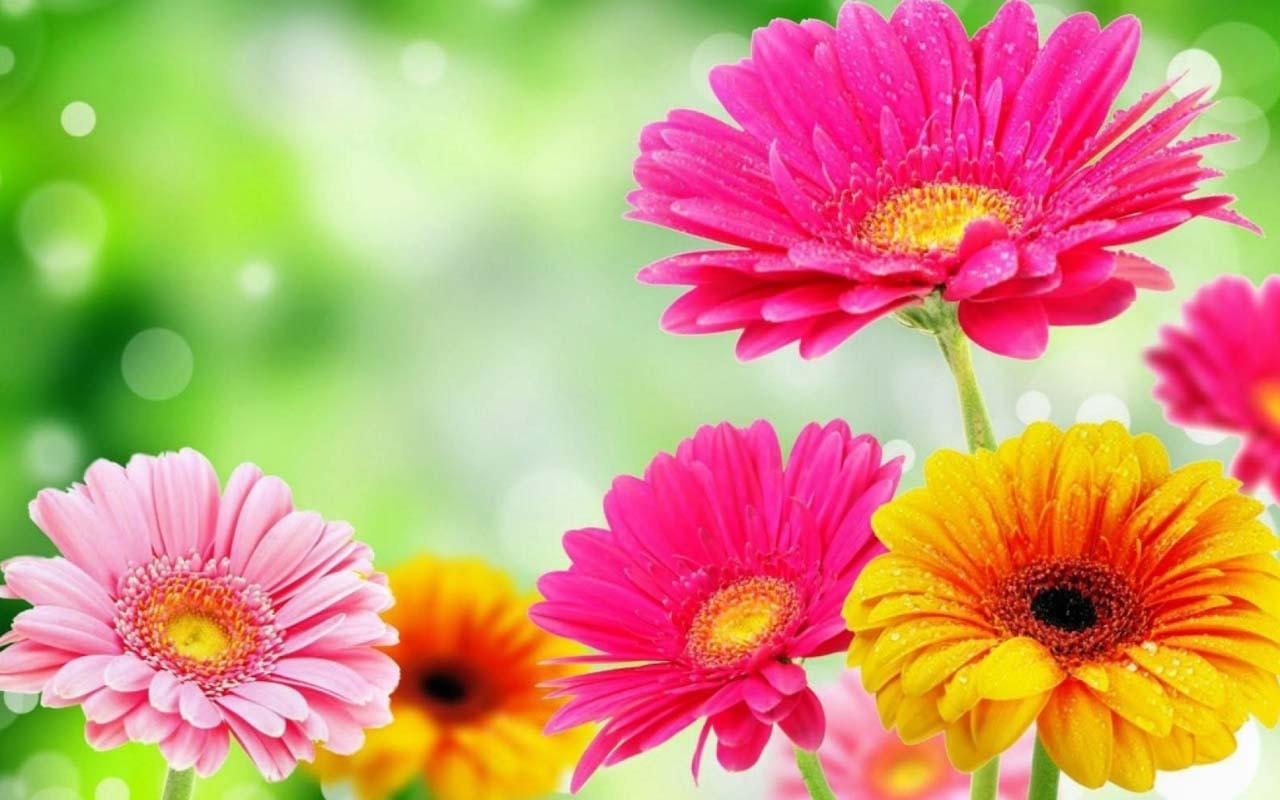 Beautiful flowers wallpapers wallpaper wednesday hongkiat 1280x800 izmirmasajfo