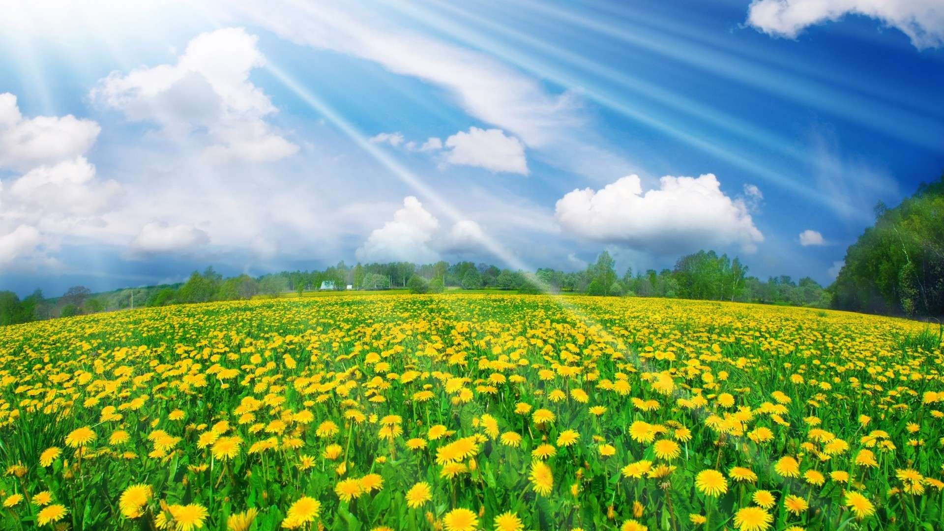 Spring Background free download  PixelsTalk Spring Flower Wallpaper Backgrounds  Wallpaper  1920x1080
