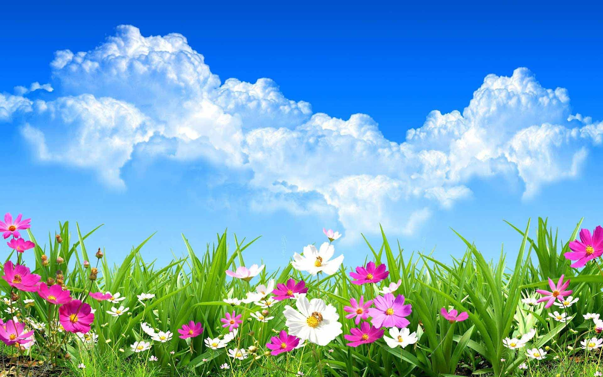 Spring flowers wallpaper free stock photos download (, Free 1920x1200