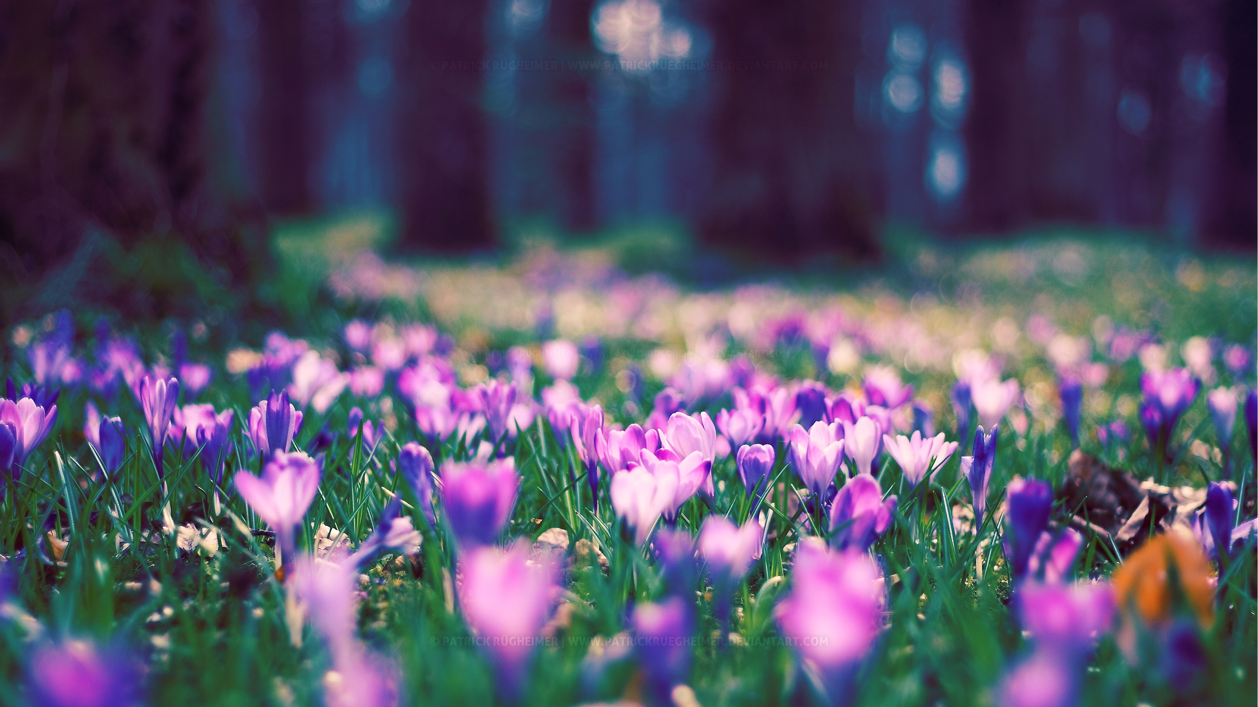 Spring Flowers Backgrounds Desktop  Wallpaper  2560x1440