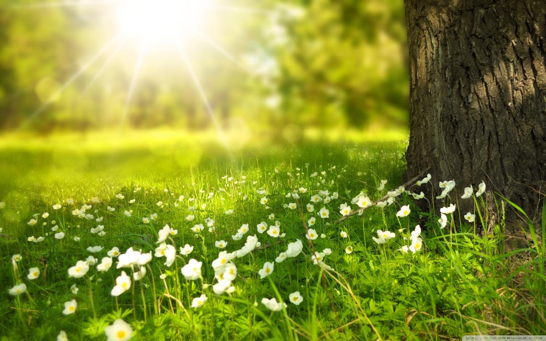Spring Walk Away Hd Desktop Wallpaper High Definition 1440x900