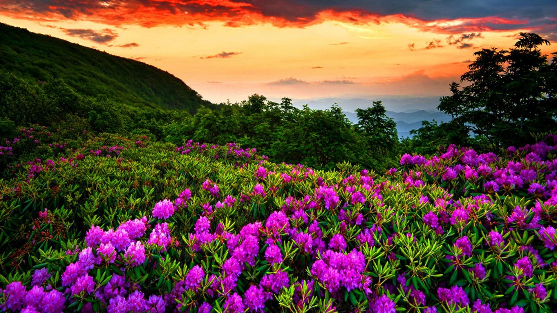 Spring Season Flowers Hd Desktop Wallpaper High Definition 1920x1080