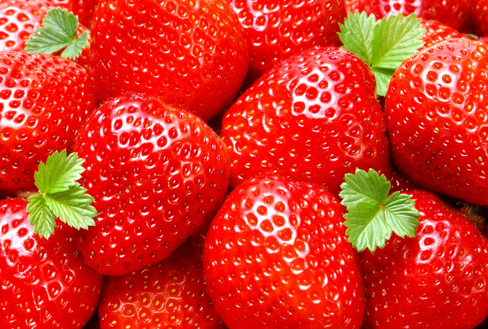 Strawberry Wallpapers High Quality  Download Free 1600x1080