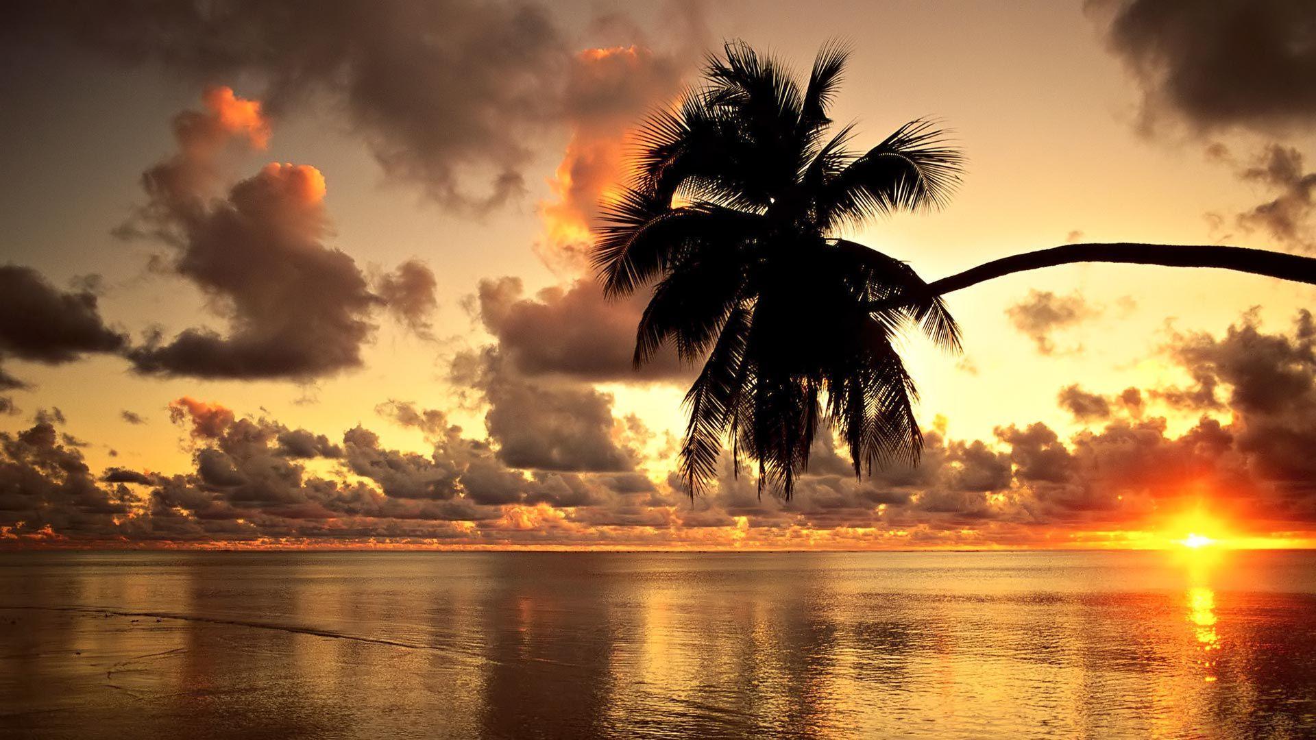 palm tree beach sunset sunset hd wallpapers palm trees sunset 1920x1080