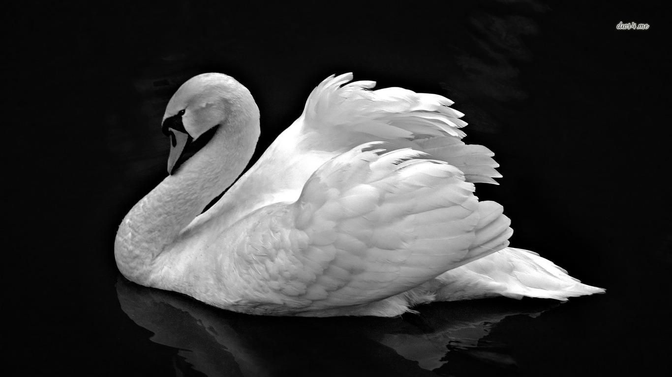 Swan Lake Wallpaper