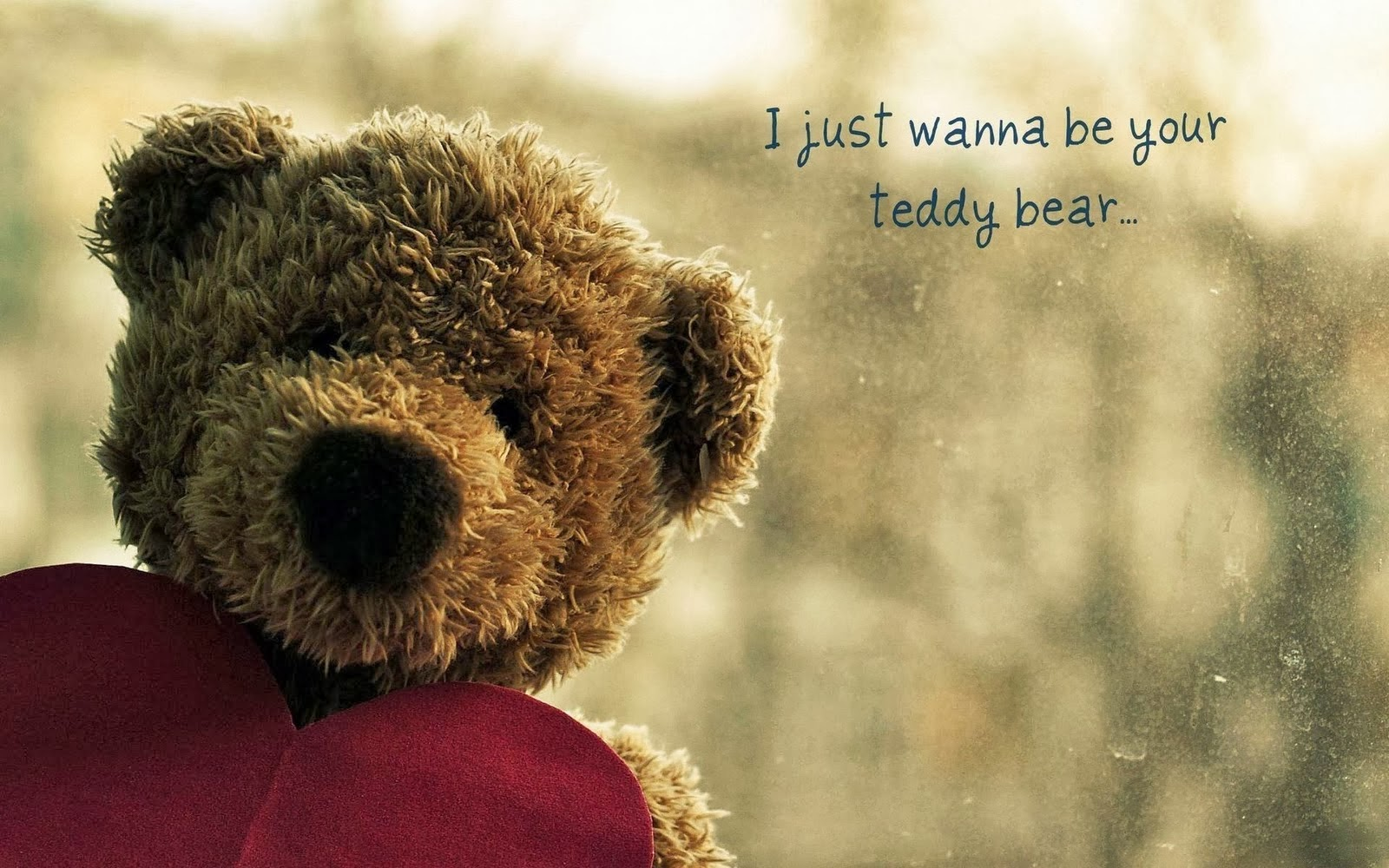 Cute Teddy Bear Wallpapers Wallpaper 1600x1000