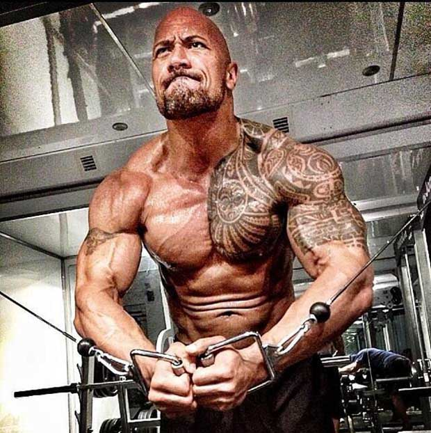 The Rock Hd Wallpapers Free Download  WWE HD WALLPAPER FREE DOWNLOAD 620x622