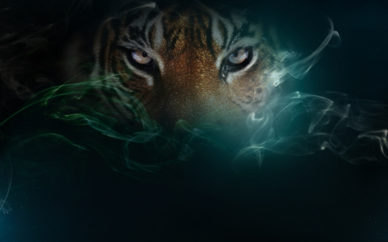 Tigers wallpapers 1280x800