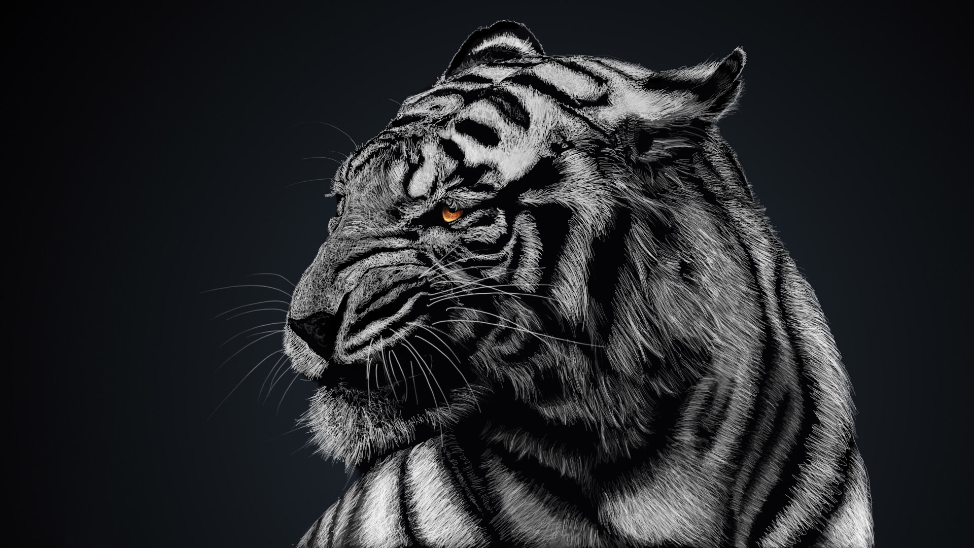 Download Tiger Animal Wallpaper Full Hd Wallpapers 1920x1080