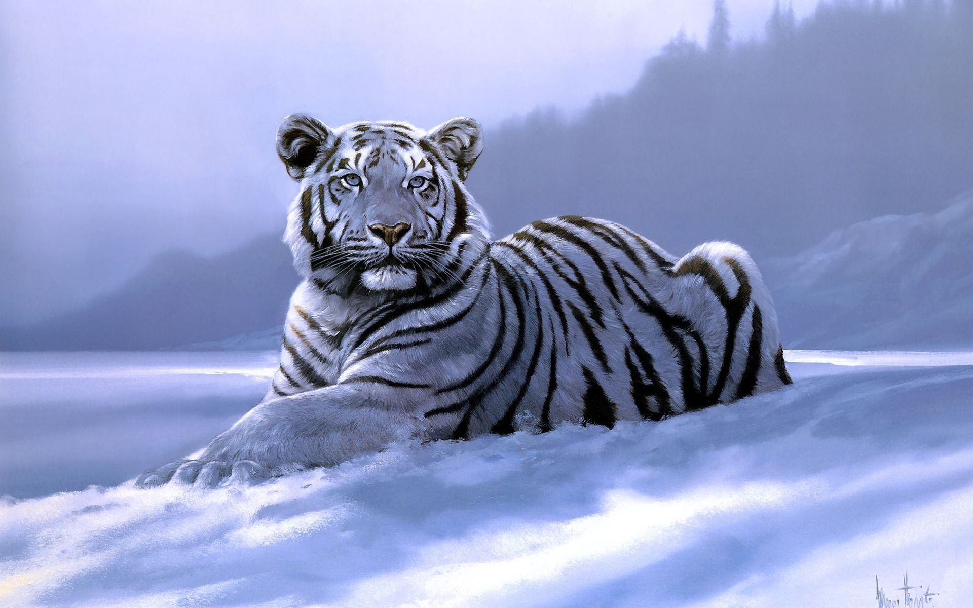 Must see Wallpaper High Quality Tiger - Tiger-White-Backgrounds-006  Collection_98135.jpg