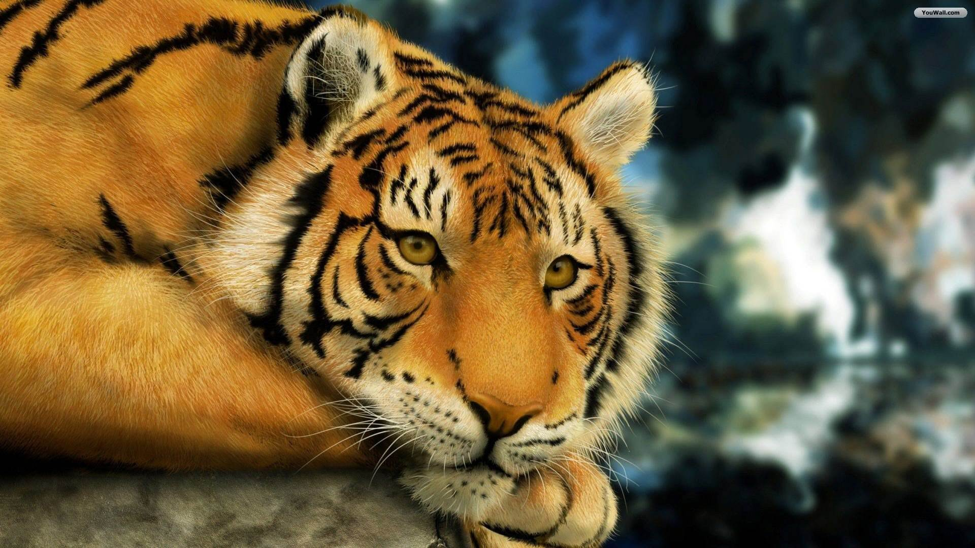 White Tiger HD Wallpapers  Backgrounds  Wallpaper  1920x1080