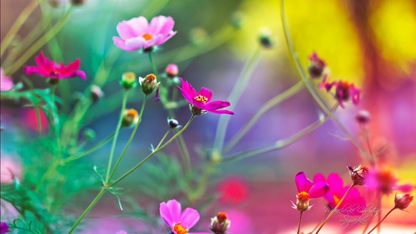 Best Ideas About Desktop Wallpaper Free Download On Pinterest 1366x768
