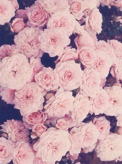 Flower Tumblr Wallpapers Widescreen Vintage Flower Quotes Blue 500x668