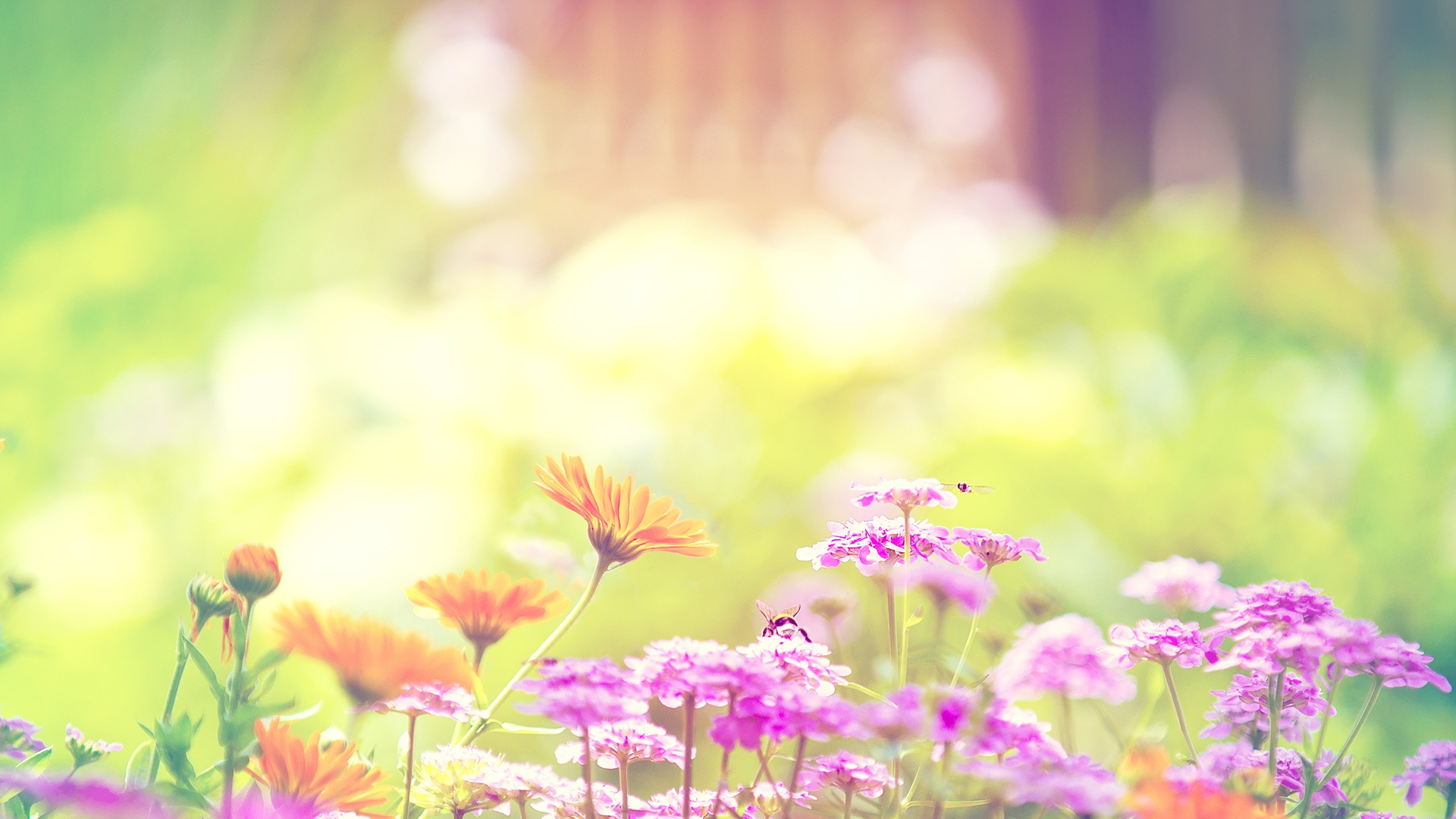 Vintage Flower Wallpapers Iphone Tumblr Pink Purple 1920x1080