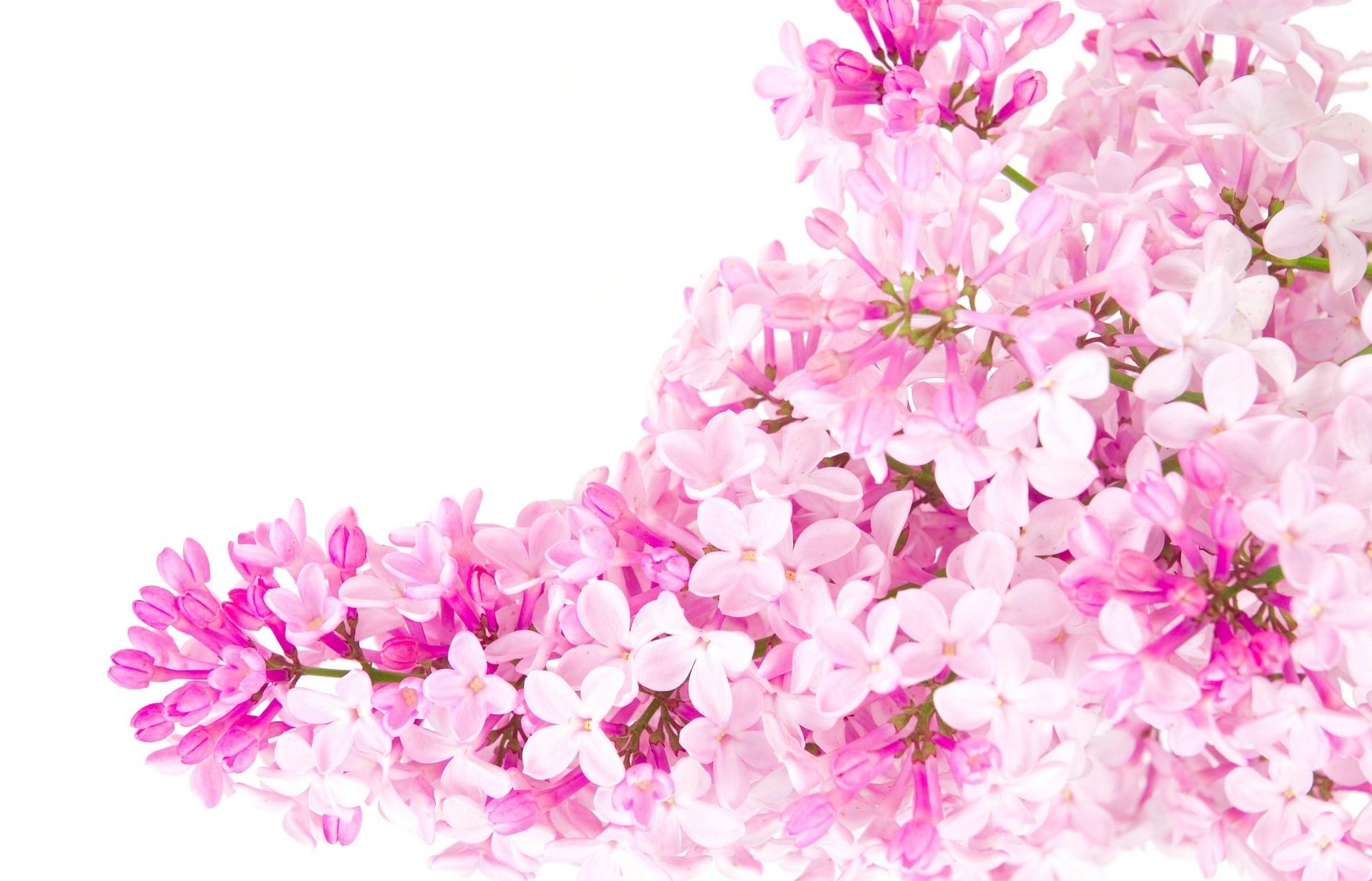 Flower Wallpaper Tumblr HBC Images About Flowers On Pinterest Samsung Vintage Phone 1920x1233