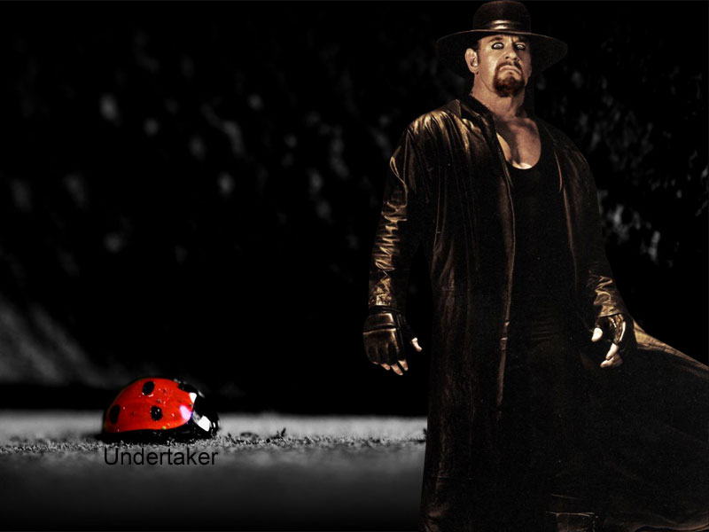 undertaker wallpaper hd background download desktop iphones 800x600