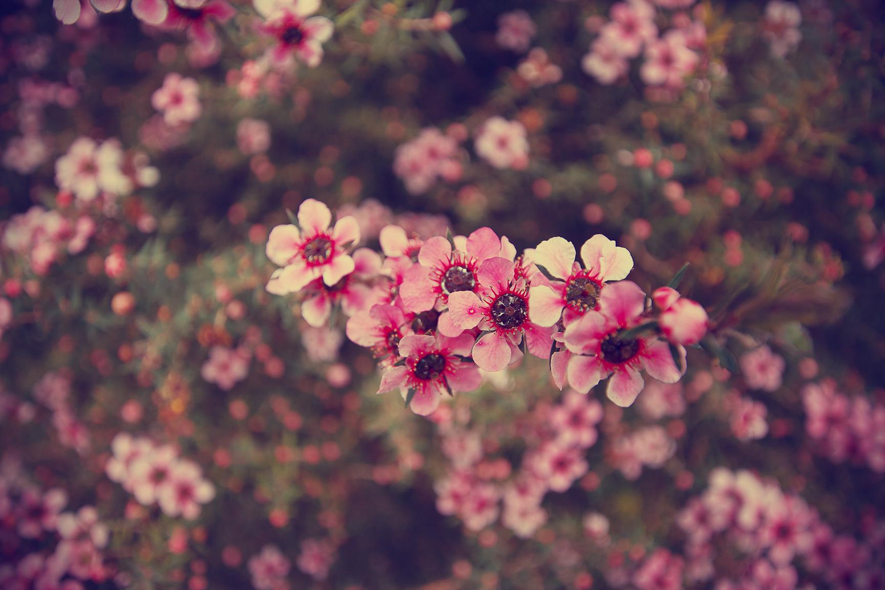Vintage Flower Wallpaper Iphone Tumblr Flowers Photo 1728x1152