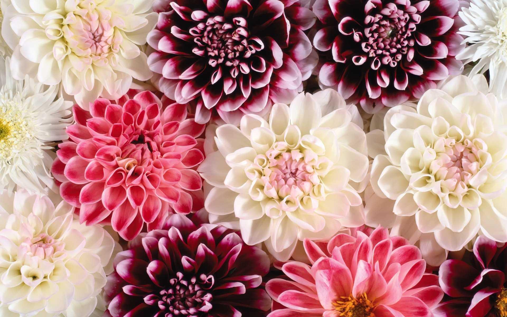 Flower Wallpapers Tumblrvintage Flower Wallpaper Tumblrflower