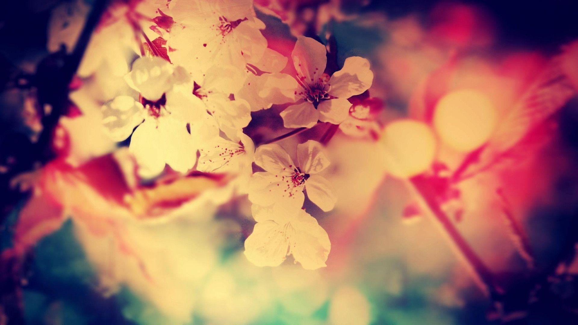 Vintage Pink Roses Tumblr Wallpaper Free Download 1920x1080