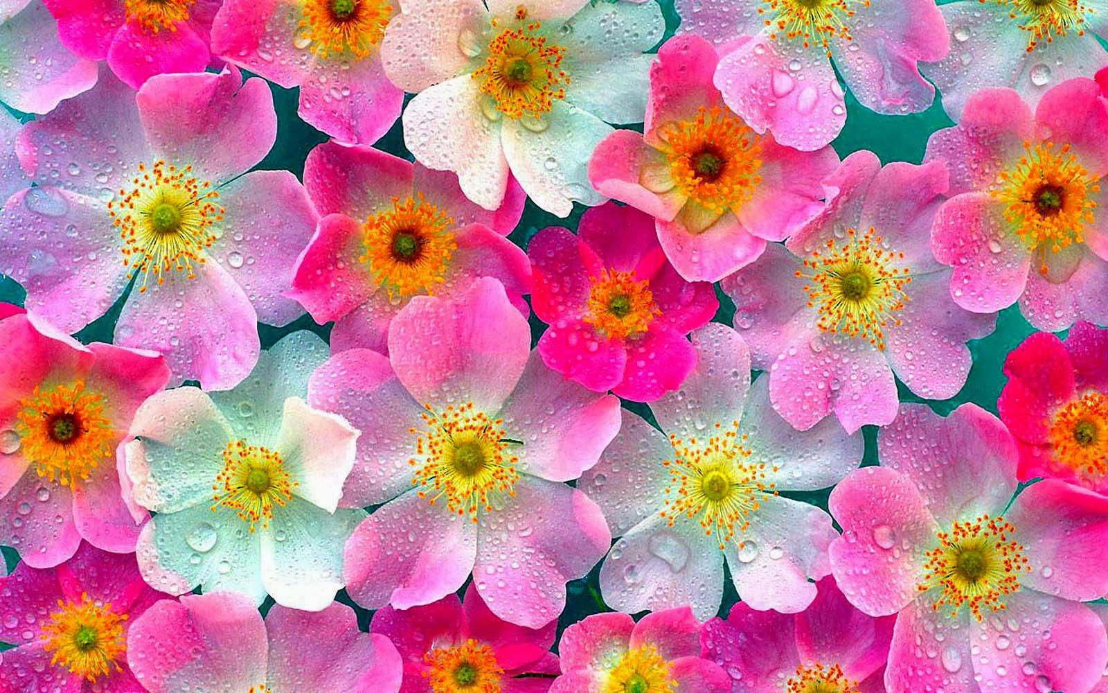 Gambar Wallpaper Cantik Pink A1 Wallpaperz For You