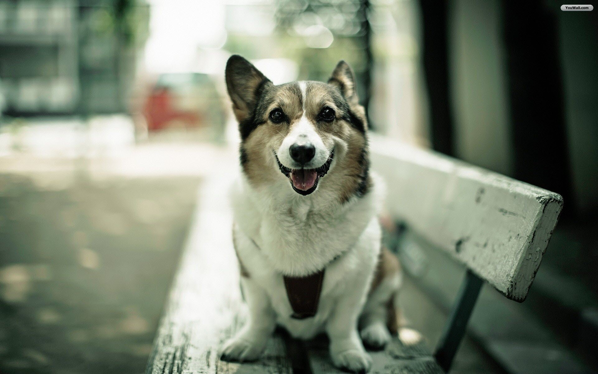 cute dog wallpaper, cute dog wallpapers for free download, gzhaixier