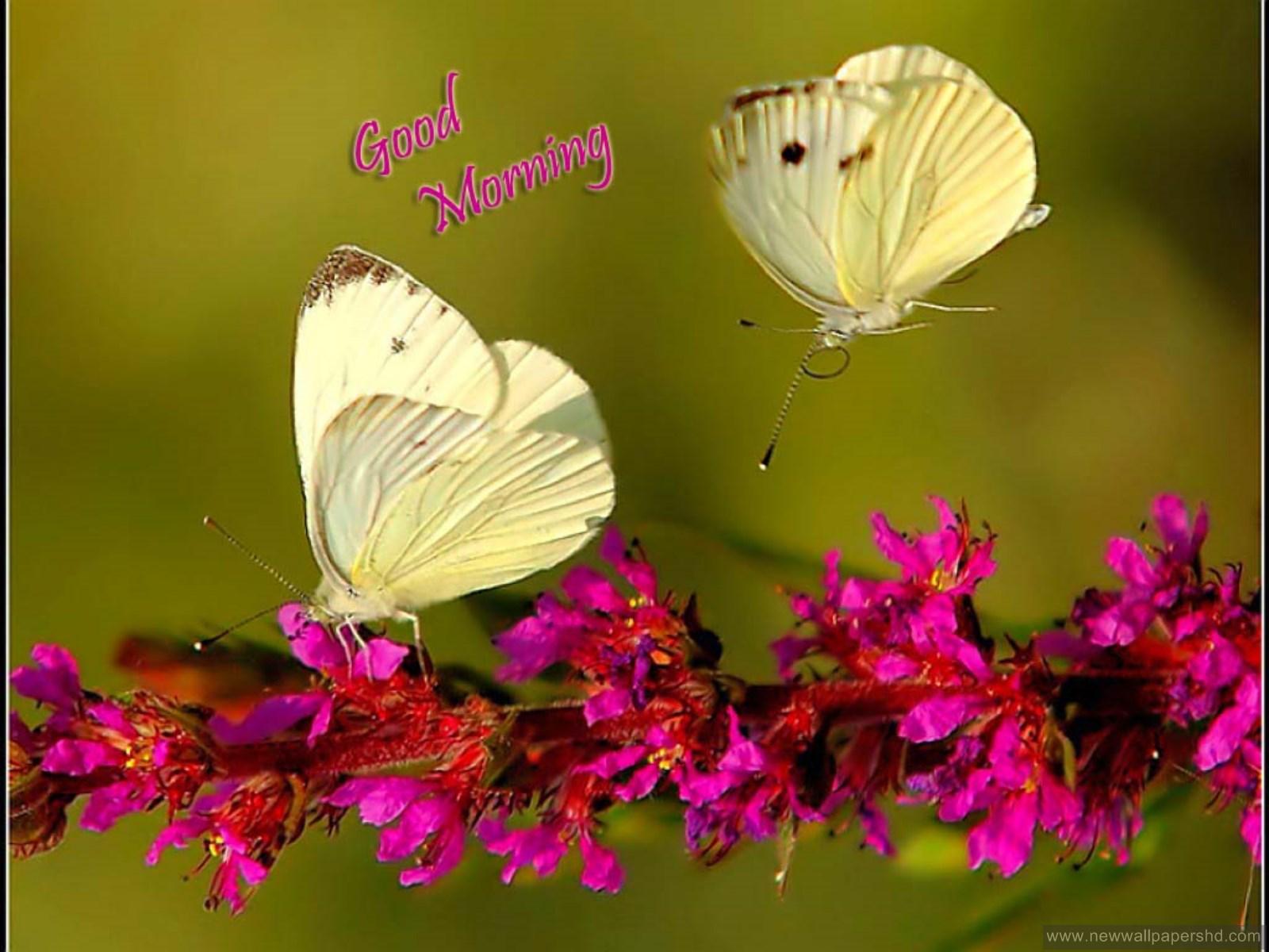Hd wallpaper of good morning - Free Download Good Morning Wishes Hd Wallpapers Quotes Images 1600x1200