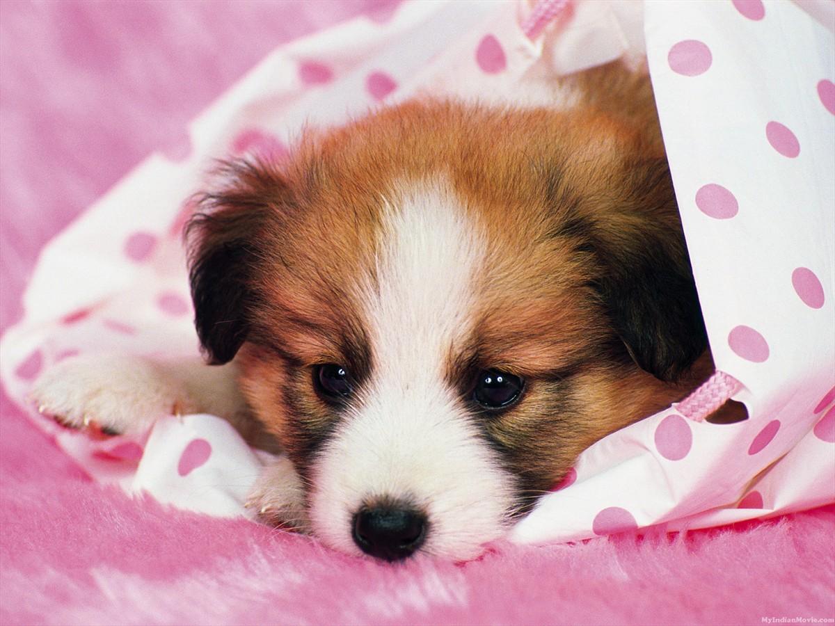 Cute Dog Wallpapers Blogoftheworld 1200x900
