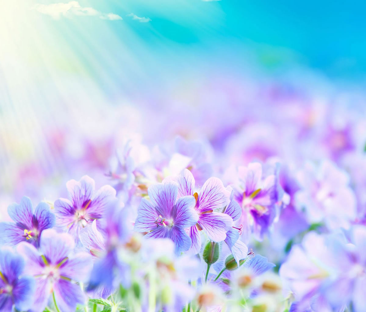 Flower Wallpapers For Android Tablets Set Tablet