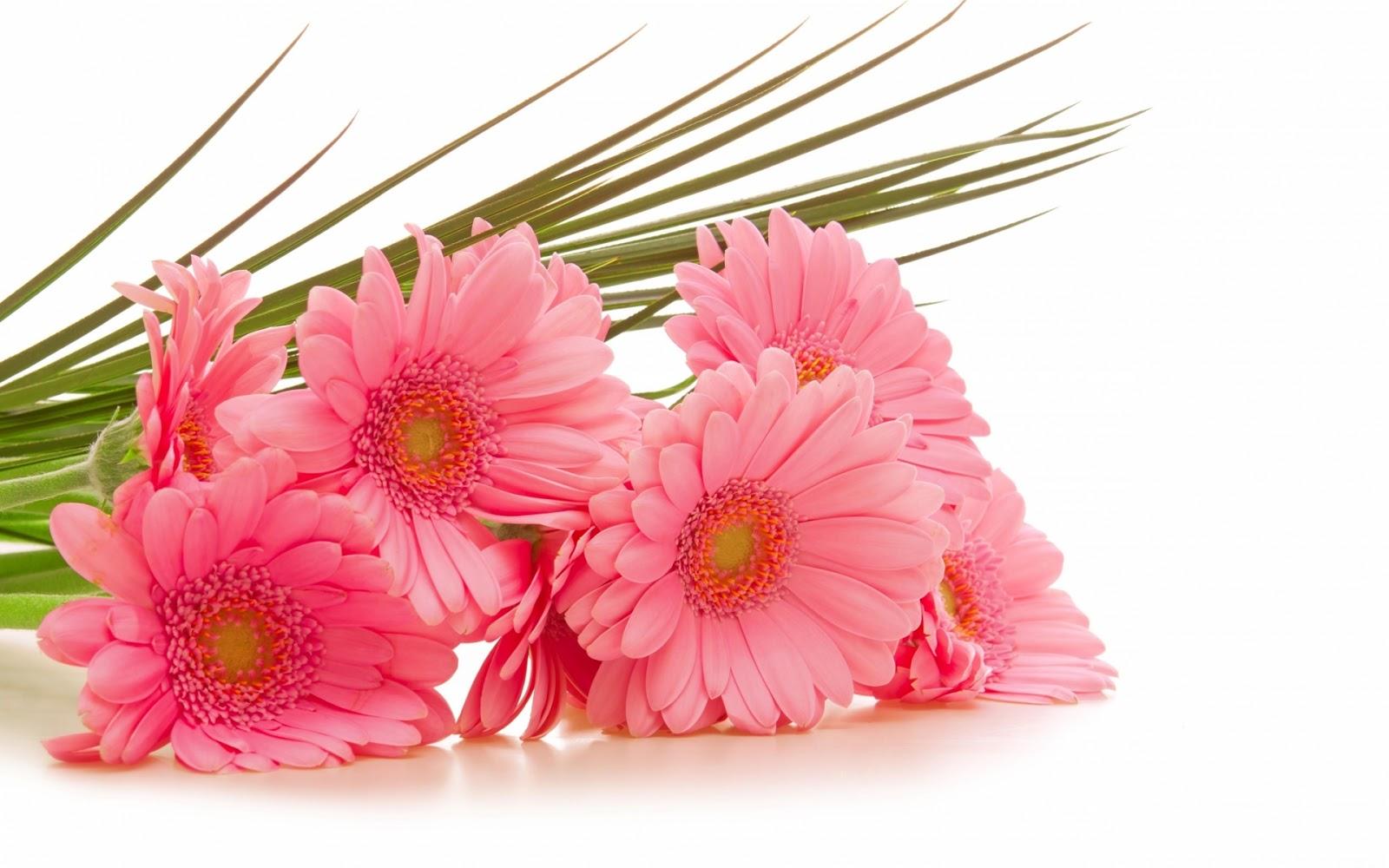 Beautiful flower wallpaper cosmo flowers 1600x1000 izmirmasajfo