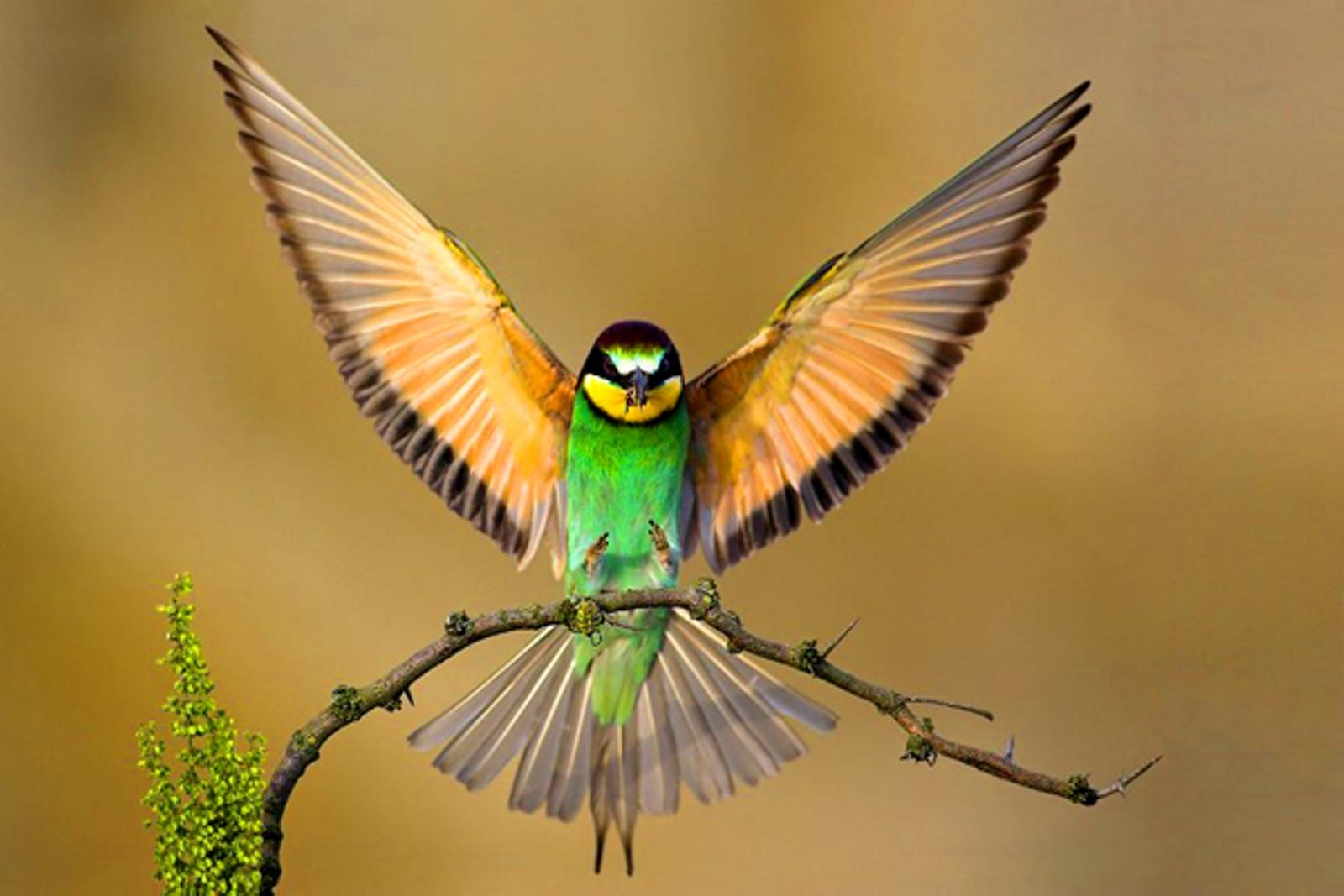Bird Wallpapers National Geographic 1600x1067