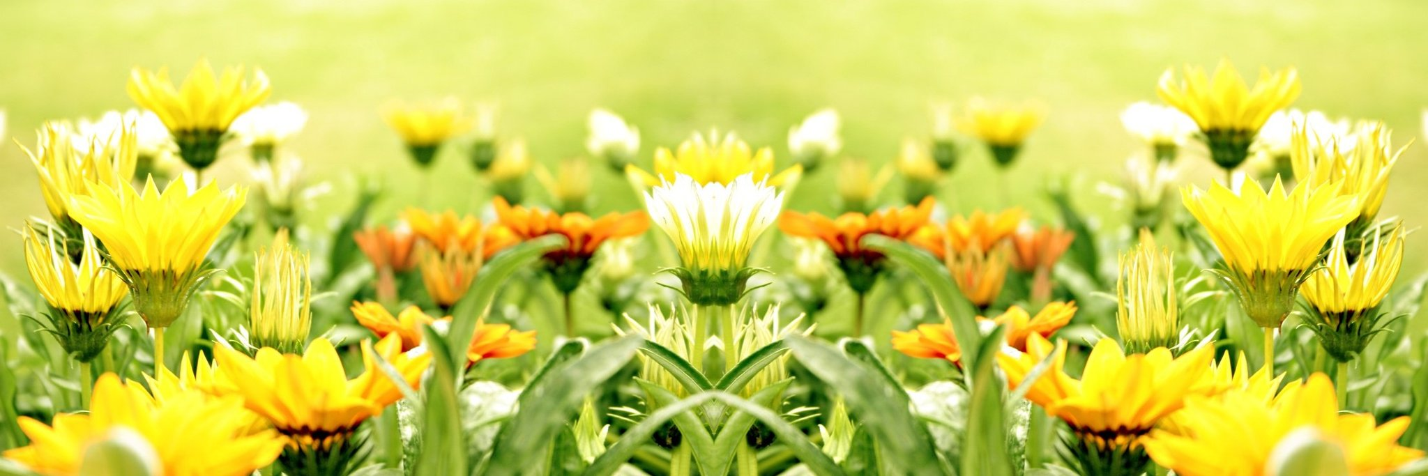 Yellow Flower Background Wallpaper 2048x683