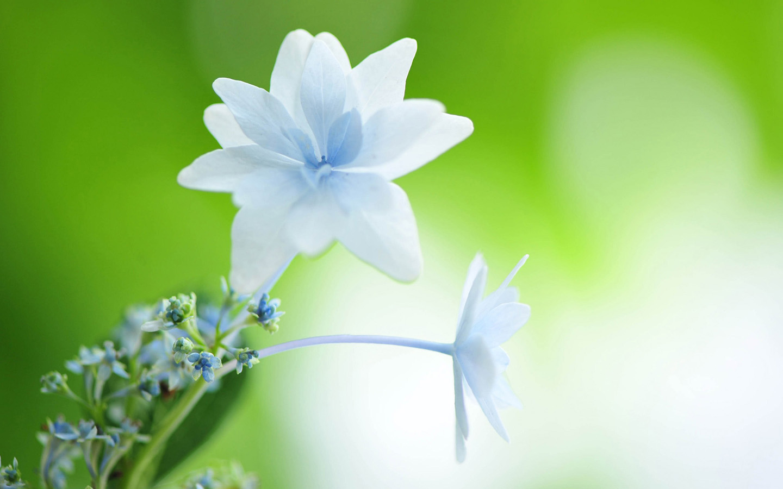White Flower Wallpaper 1440x900