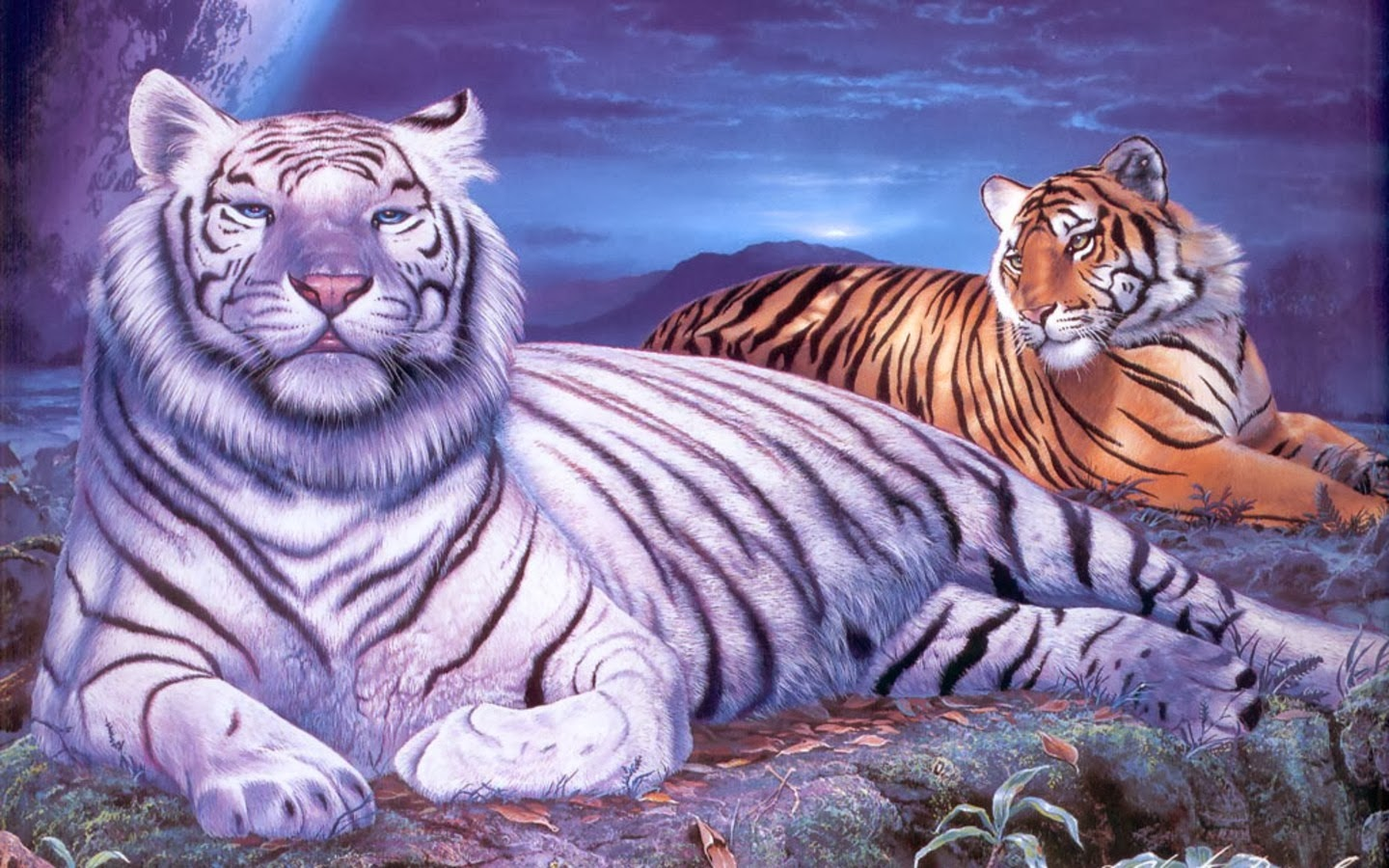 White Tiger Hd Wallpapers Backgrounds Wallpaper Page 1440x900