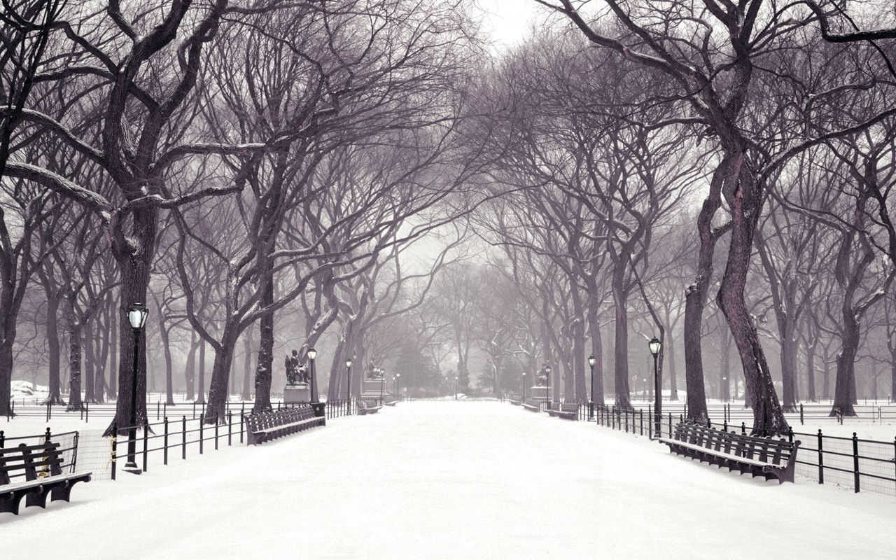 Collection Of Free Winter Scenes Desktop Backgrounds On Hdwallpapers 1280x800