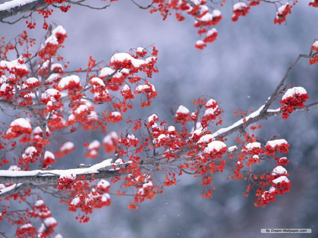 Mind blowing free winter wallpaper for computer te winter mind blowing free winter wallpaper for computer te winter wallpapers hd free download pixelstalk winter season beautiful hd wallpapers free 1024x768 voltagebd Image collections