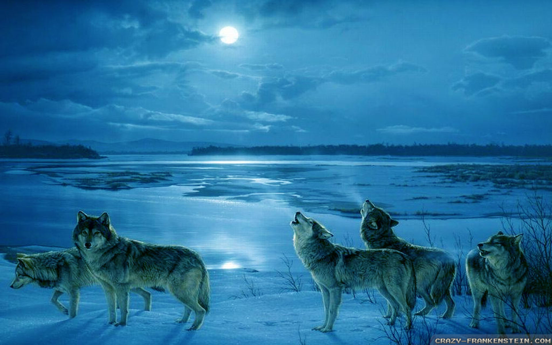 winter wolf wallpapers 31 wallpapers � adorable wallpapers