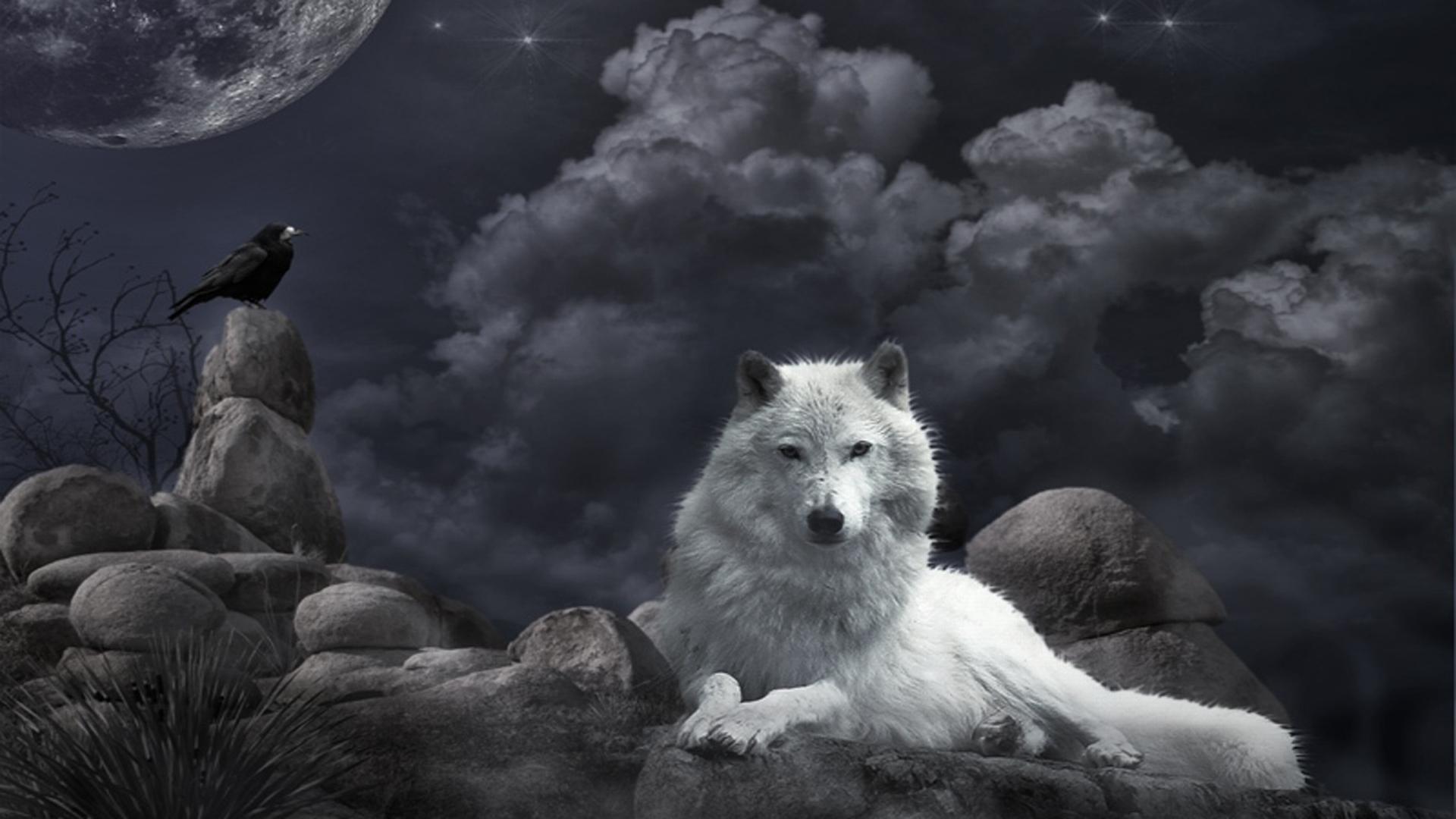 Большой волк обои на рабочий стол