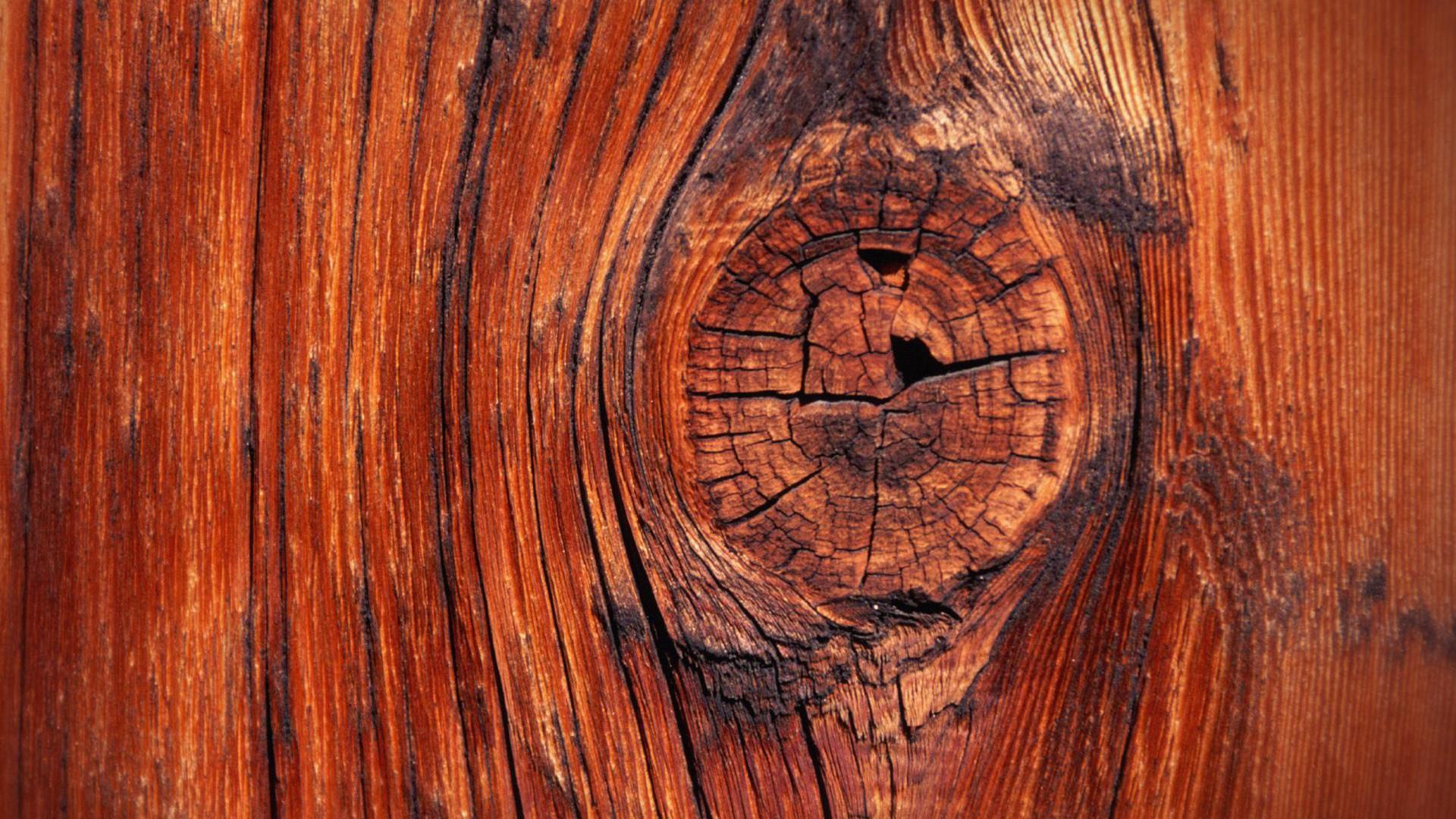 Wallpaper Wood Hd 1920x1080