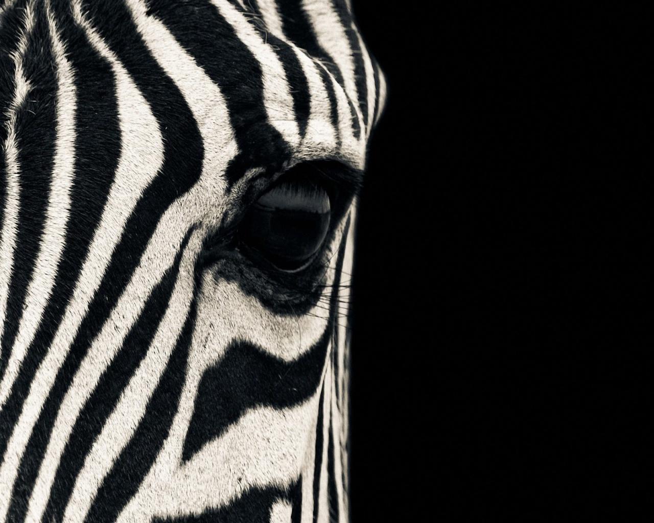 Download Zebra Print Wallpaper Full HD Wallpapers 1280x1024