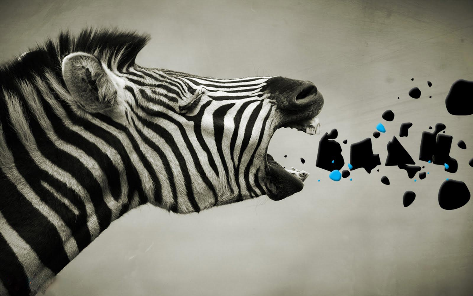 Free Zebra Wallpaper   1600x1000