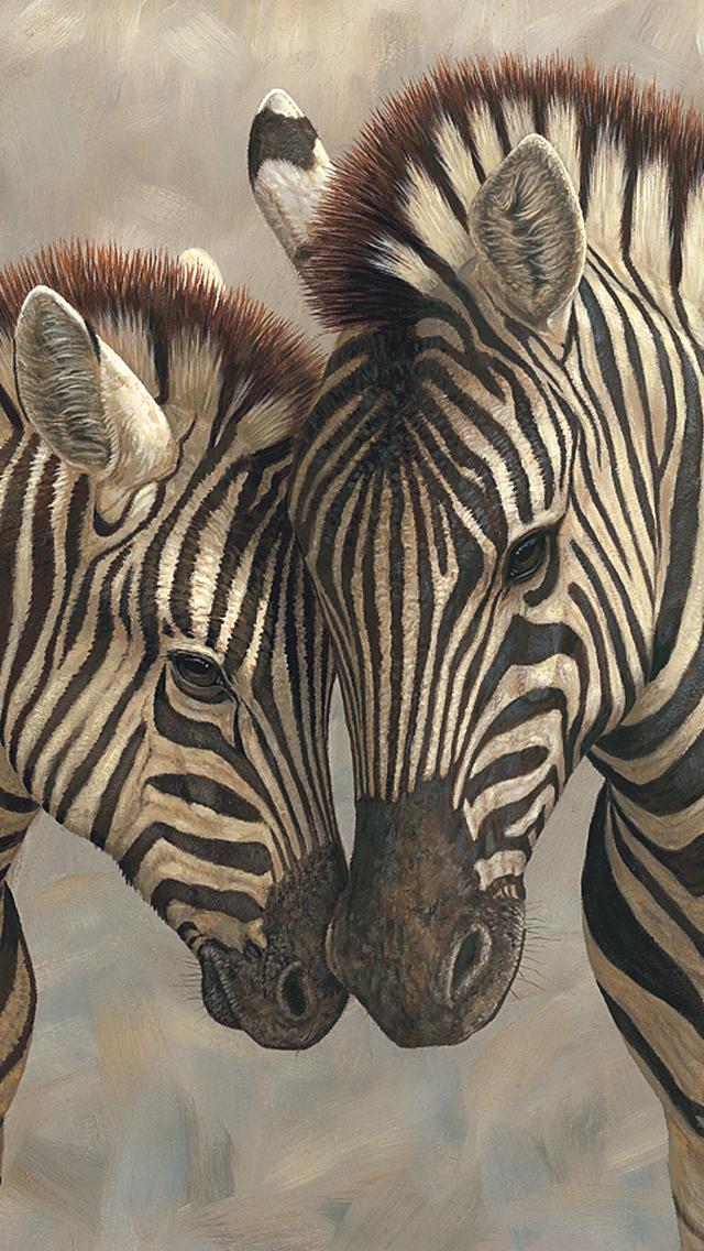 Zebra Iphone Wallpapers 29 Wallpapers Adorable Wallpapers