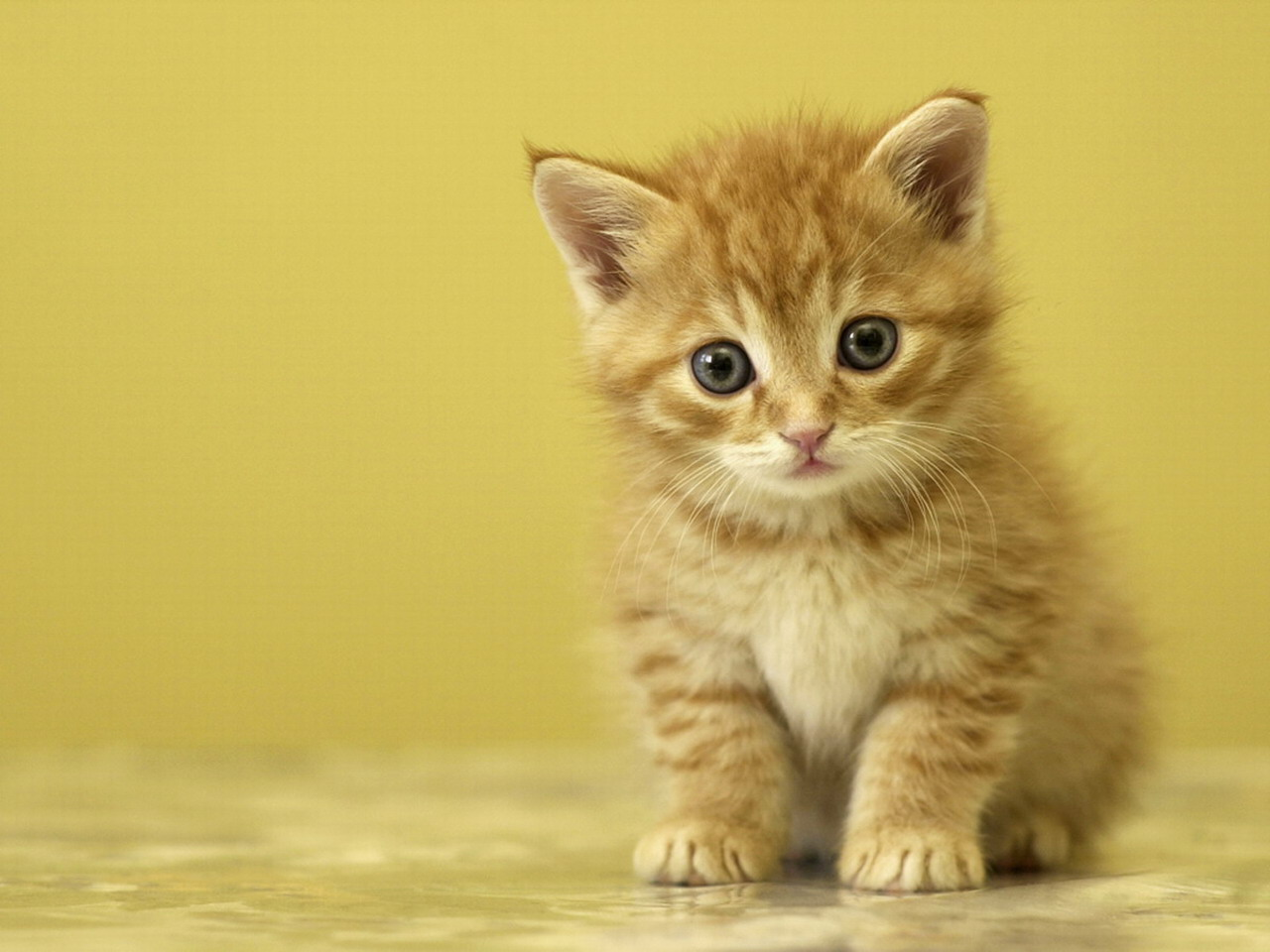 Cute Baby Cats Wallpapers 002 – Adorable Wallpapers