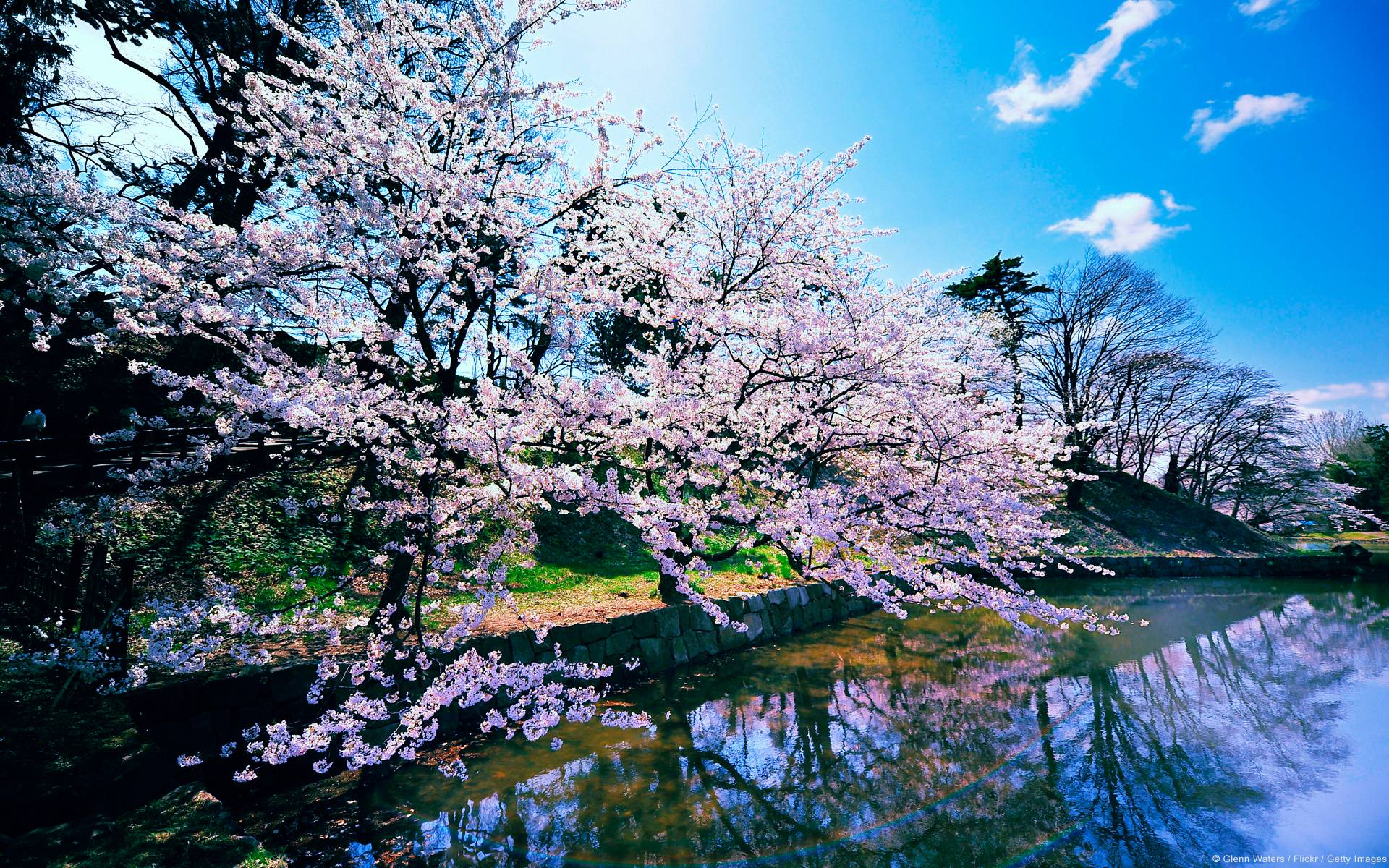 fascinatingcherryblossomtreewallpapercollectionhdwallpaperscherry