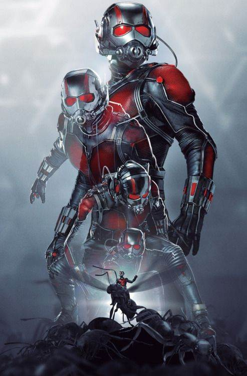 AntMan HD Wallpapers  Backgrounds  Wallpaper  493x750