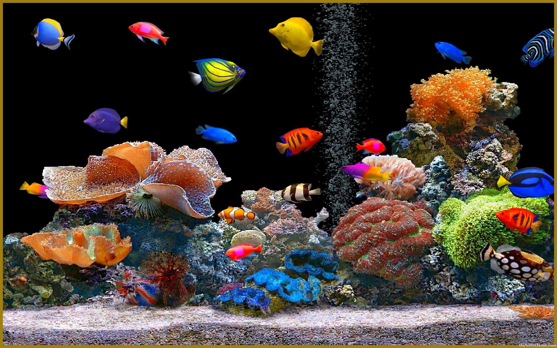 Photo collection wallpaper 3d aquarium 1600 fish tank wallpapers hd wallpapercraft voltagebd Images