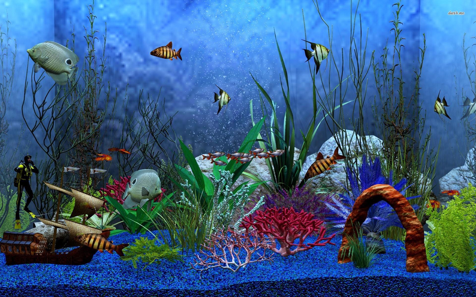 Aquarium wallpapers 35 wallpapers adorable wallpapers for Fond aquarium