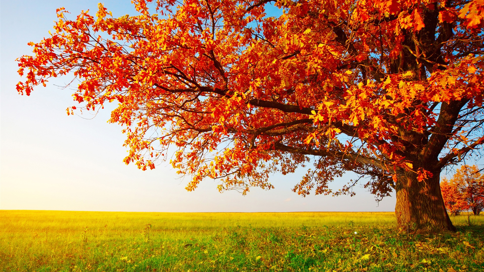 Autumn Wallpapers Hd Desktop Backgrounds Images And Pictures 1920x1080