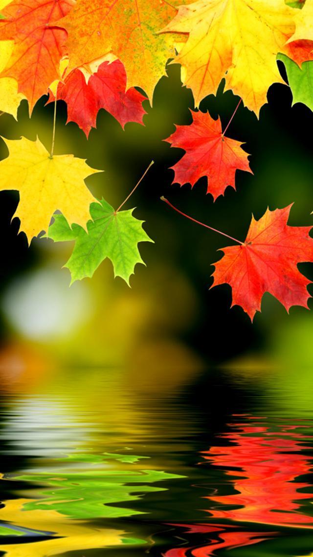 картинки hd осень на телефон
