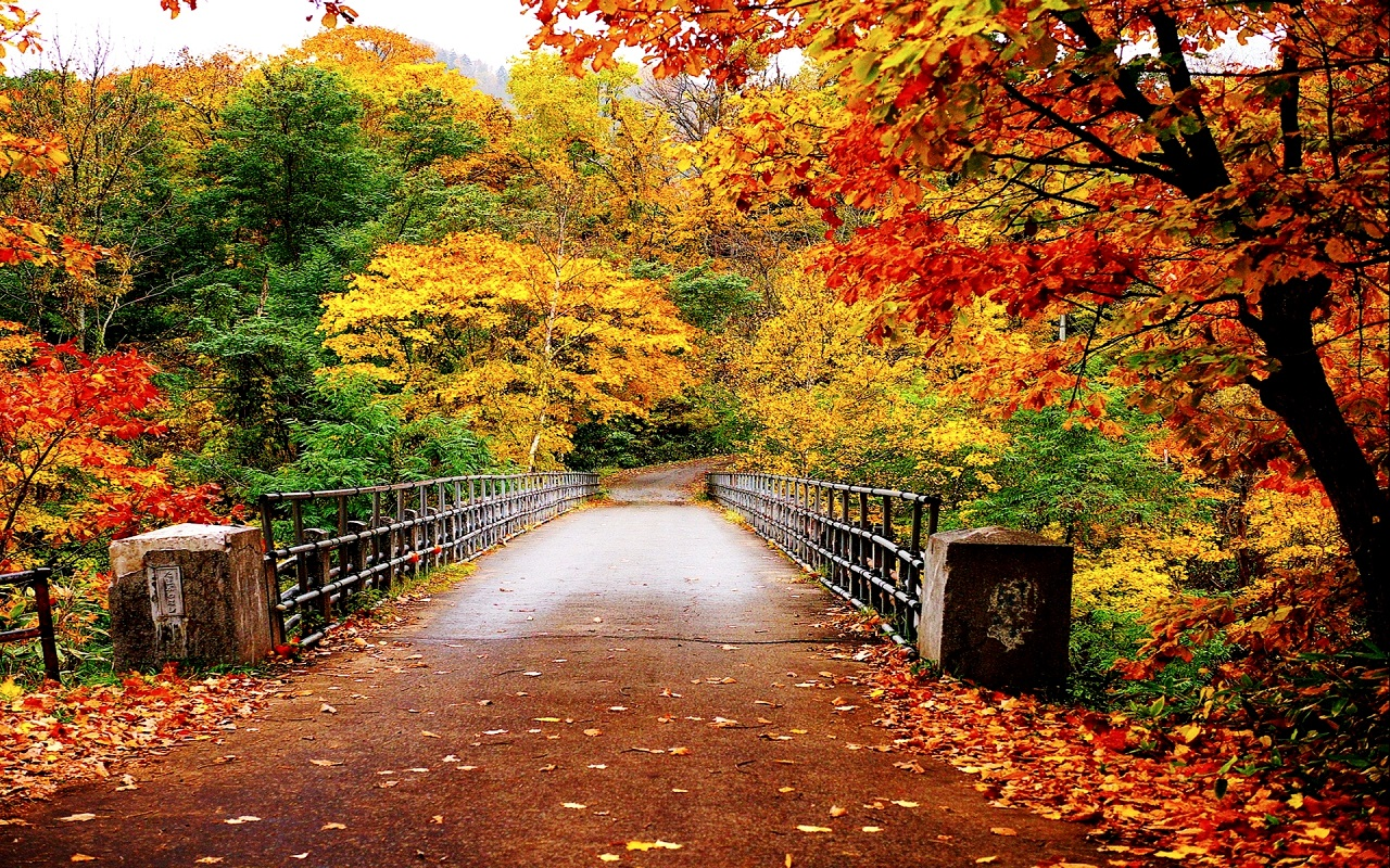 Autumn Nature Wallpapers HD Pictures  One HD Wallpaper Pictures 1280x800